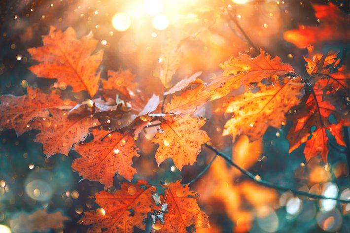 秋はオシャレが楽しい季節
