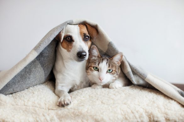犬 猫 ペット