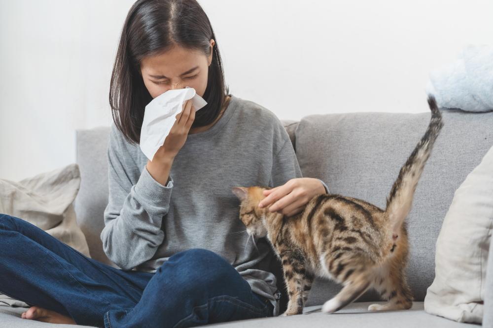花粉症 風邪 鼻水 ペット