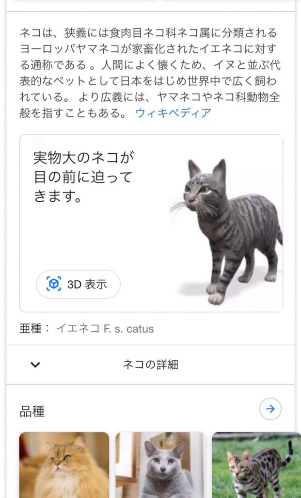 Googleネコ