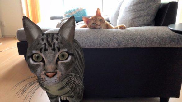 Googleネコ ARキジトラと猫本物