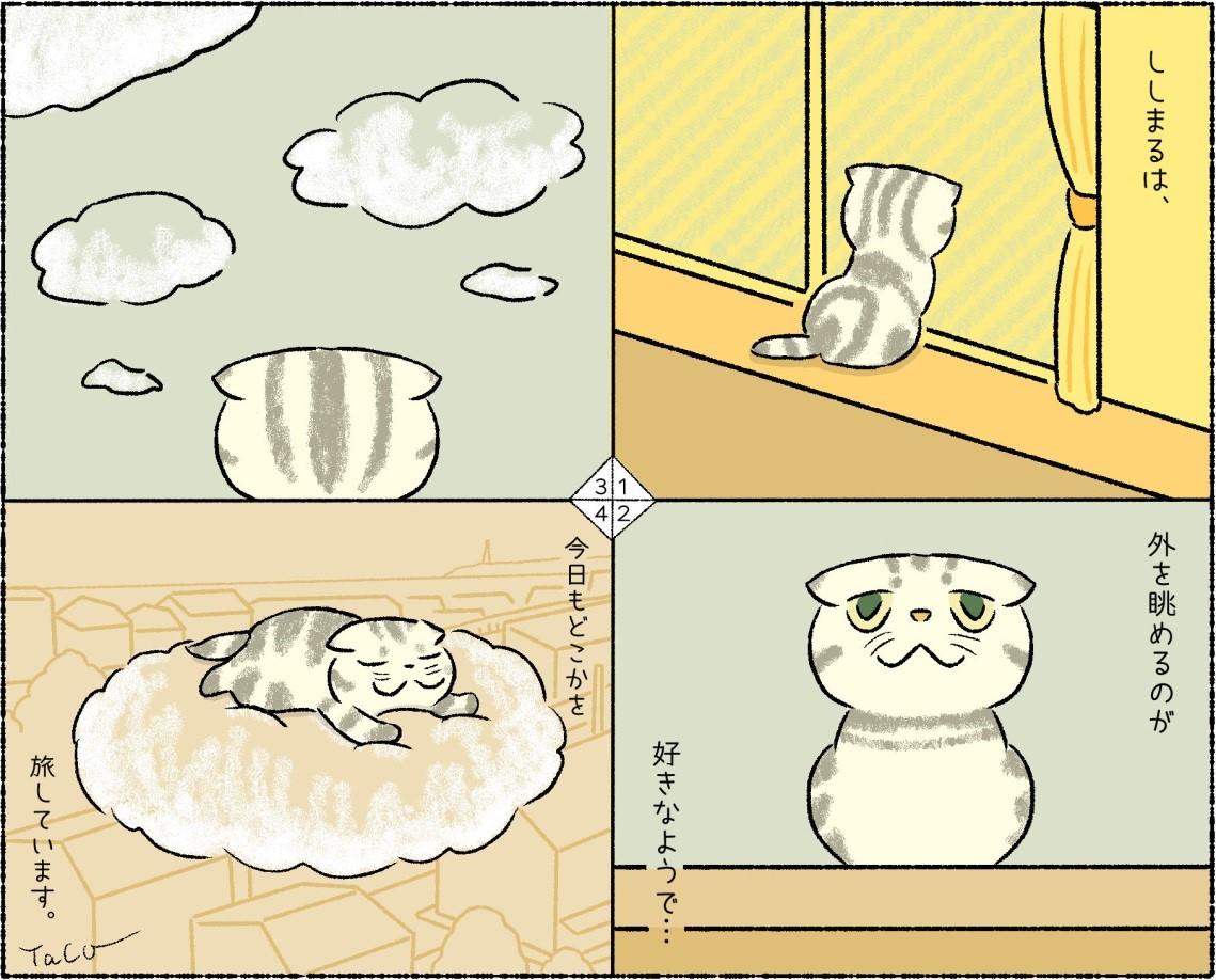 漫画家・イラストレータとして活躍するTaco(@taco_emonemon)さんの愛猫・ししまるくん
