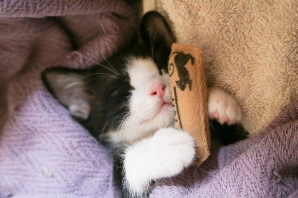 マズル 猫 hotographe ikuyo(@photographe_194)さんが撮影した生後1ヶ月の子猫