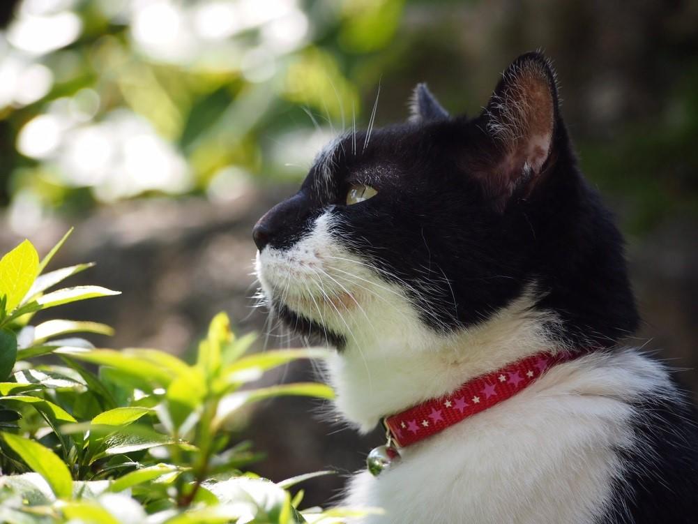 マズル 猫 トミー(@tommy5329)さんの愛猫クロちゃん(当時15歳)