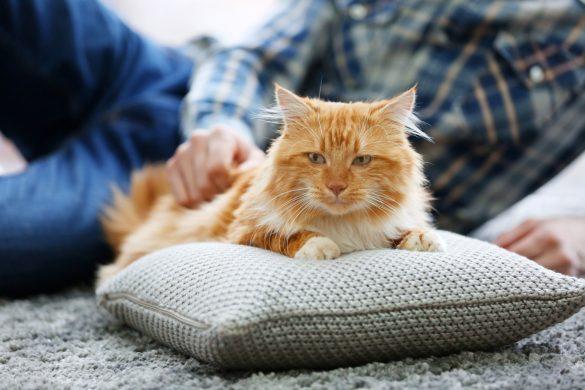 猫好き不倫カップルが猫カフェでデート!