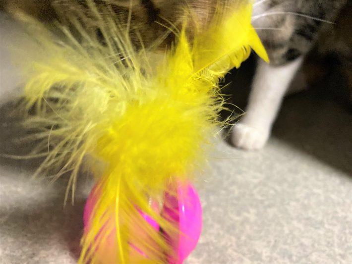 「羽の玩具」に大興奮の猫