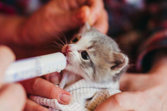 子猫にミルク
