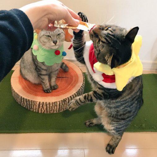 """【猫の日】思わずクスっと笑っちゃった""""うちの愛猫写真"""""""