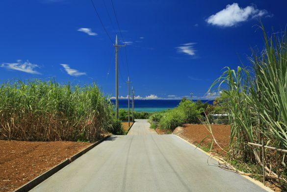 沖縄 砂糖きび 海
