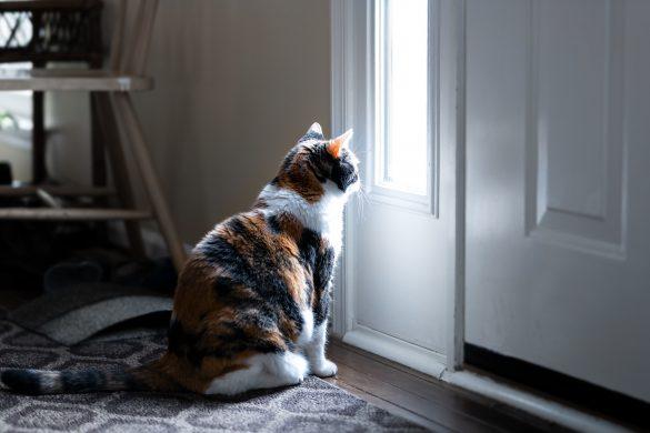 ドアの前で待つ猫