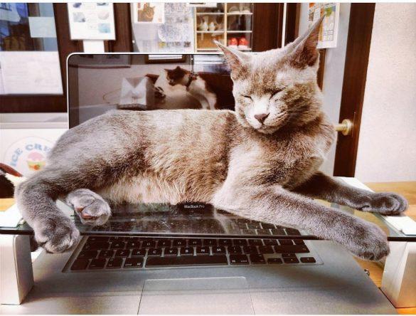 猫カフェ「タイム」(@NekoCafe_TiME)のスタッフ猫トトロくん
