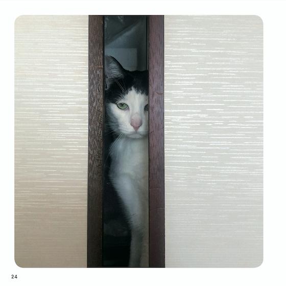 『ねこチラ』(パイ インターナショナル、3月11日発売)