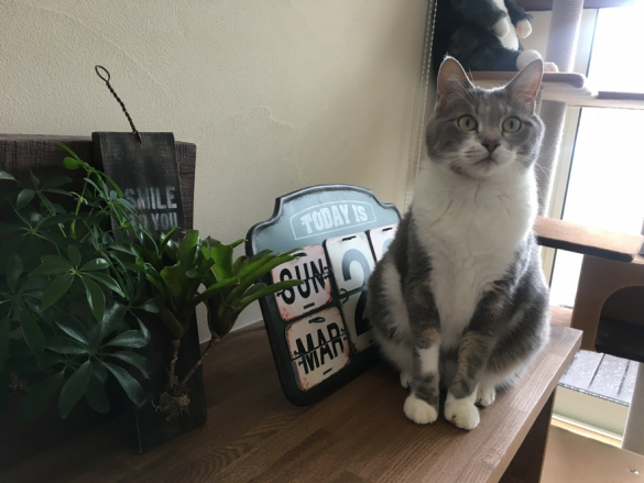 「おでん」くん(グリーンさん愛猫)
