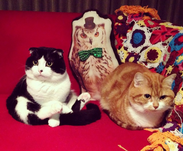 「おにぎり」くん(左)、「たくあん」くん(右)(藤本さん愛猫)