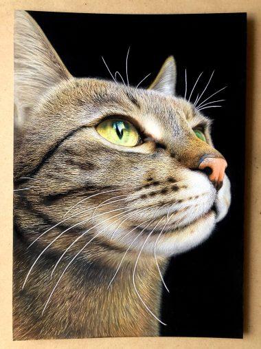 「音海はる」こと、工藤陽輝さんが色鉛筆で描いた猫