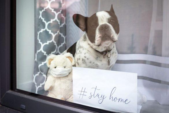 新型コロナウイルス、犬、ステイホーム、stayhome、パグ