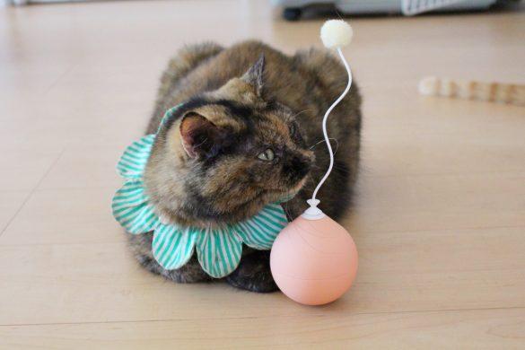 「電動猫じゃらし」ってどうなの? 遊ばせてみたら可愛い反応が…