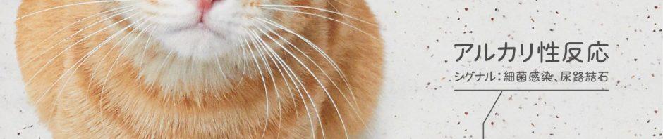 (アイキャッチ)手軽に尿検査ができる猫砂「しぐにゃる」