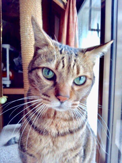 みとらさんの亡き愛猫・虎之助くん