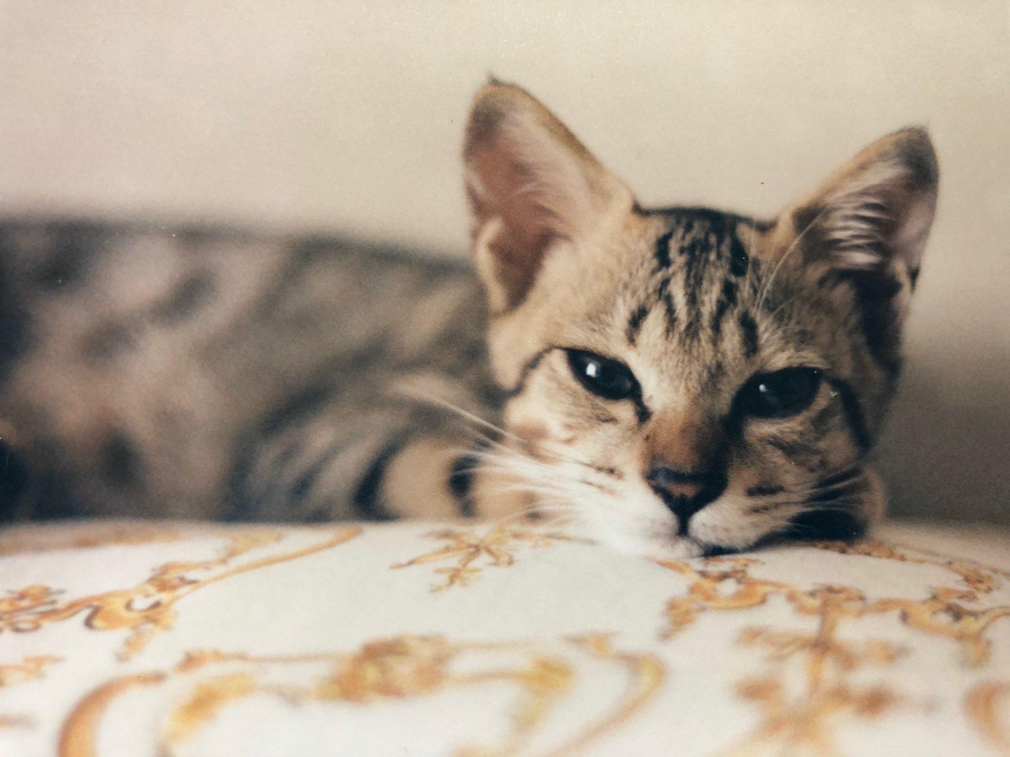 子猫時代の虎之助くん