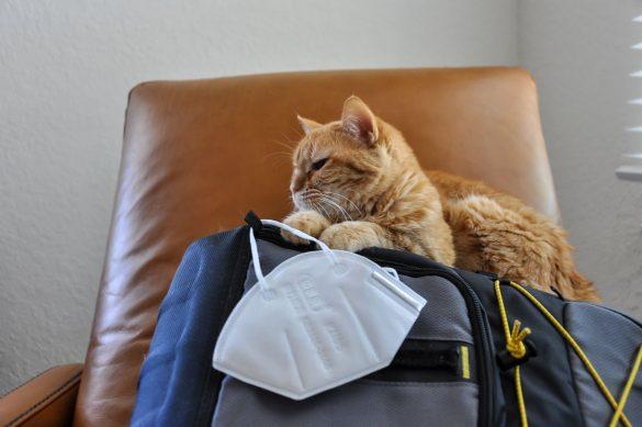 猫 コロナ