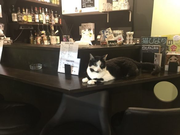 """猫がいるお店に込めた""""保護猫への想い"""""""