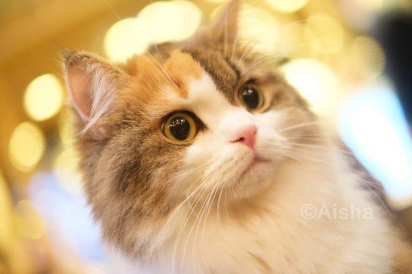 猫ちゃんに近づいてじっくり撮れるのも、猫カフェならでは