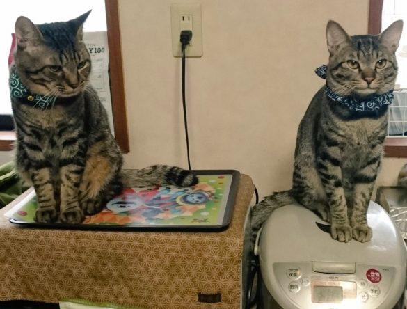 KINGIN9319さん宅のKINくん(右)とGINくん(左)