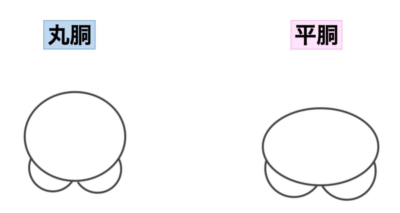 丸胴と平胴