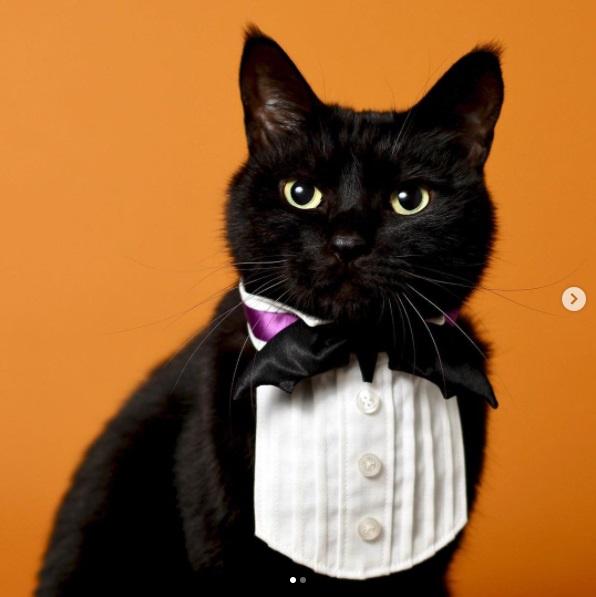 きっかけは1匹の黒猫と出会ったこと―イラストレーターが作る「オンリーワンな首輪」