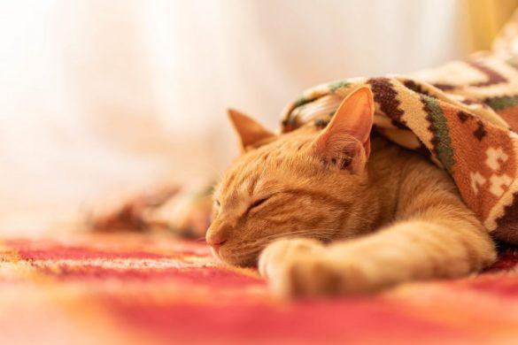 猫 ホットカーペット