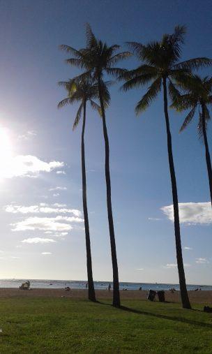 12月のアラモアナビーチ。ローカルが過ごしています。