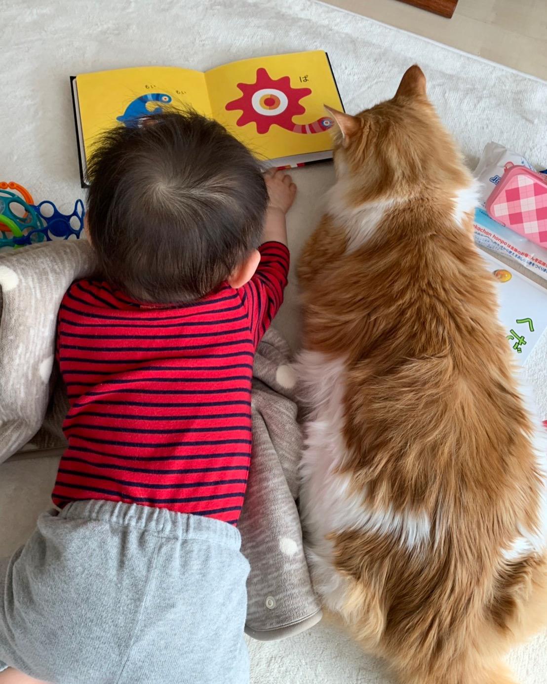 山内さんの愛する息子さんと猫