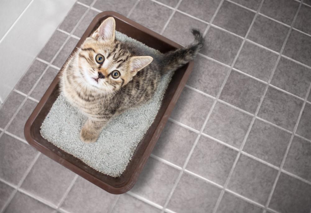 猫 トイレ砂