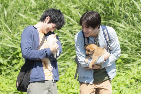 動物虐待、多頭飼育崩壊現場のリアルと、日本の問題点。映画『犬部!』脚本家に聞く