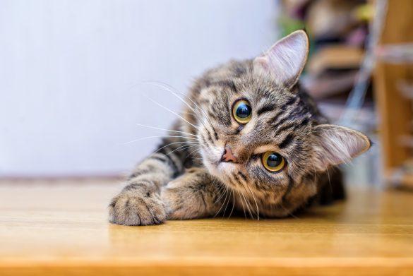 「猫が飼いたい!」衝動の前に